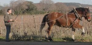 Le cheval Mézenc profite des airs de cornemuse mais participe également activement à la récolte